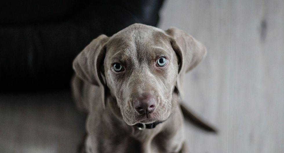 El can protagonista de la singular escena se ha 'robado' el corazón de miles de usuarios de YouTube. (Pixabay)